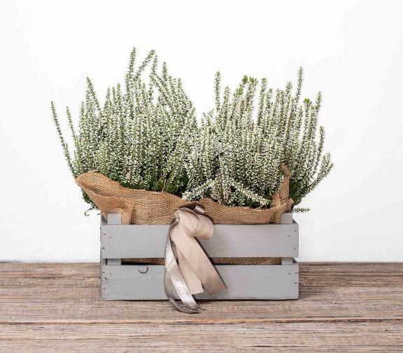 Cajita con plantas