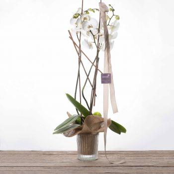 Orquídea con base de cristal