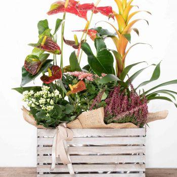 Caja de madera con plantas