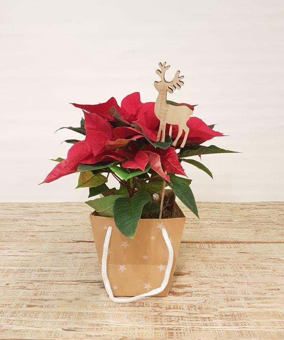 Bolsa con flor de pascua